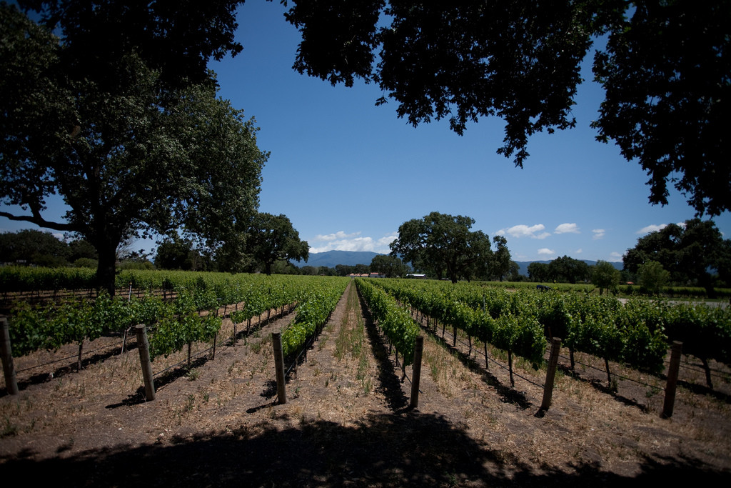 California's Central Coast: a luxury wine country experience
