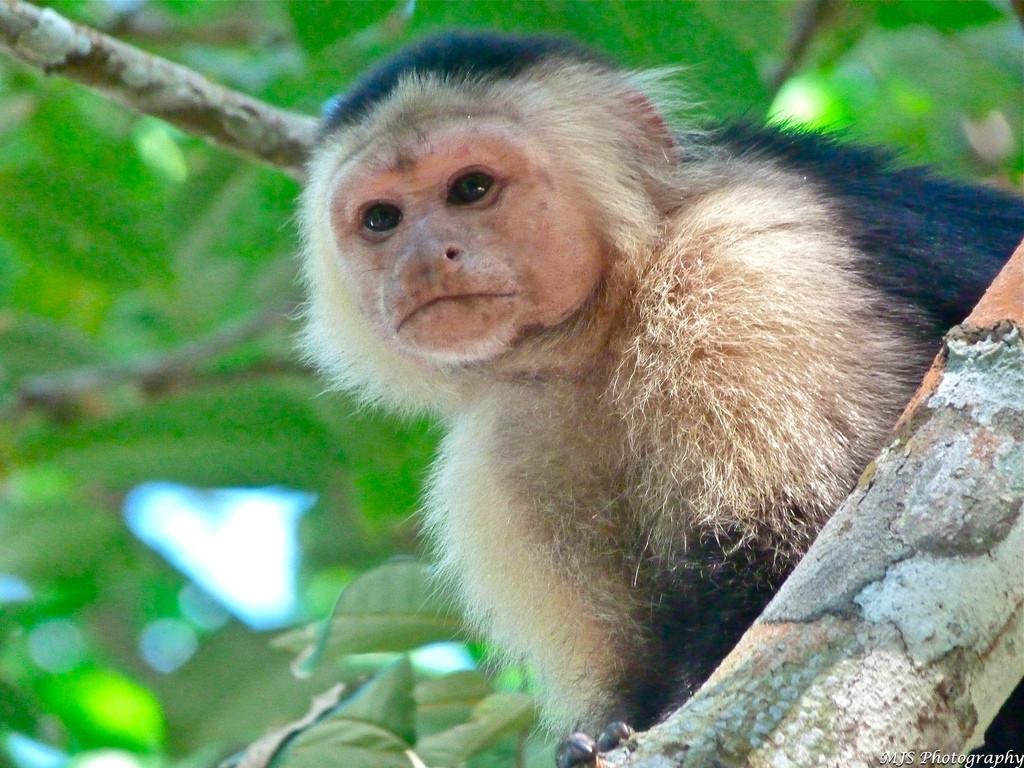 Our Perfect Costa Rica Adventure