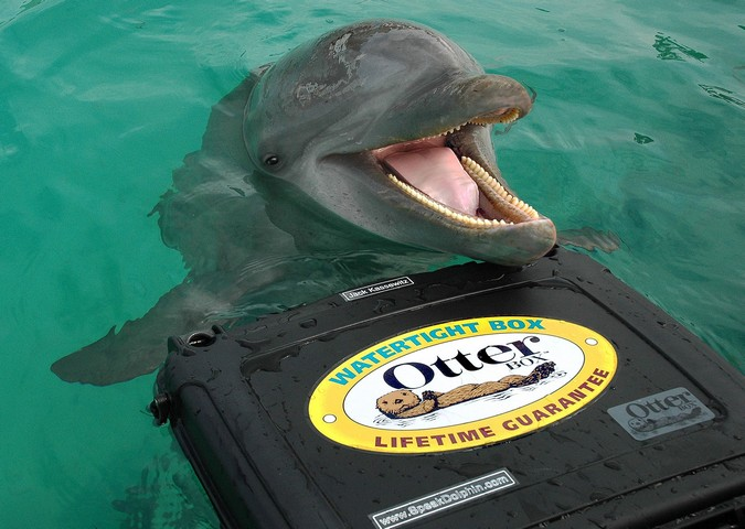 Dolphin Discovery in Isla Mujeres, Mexico