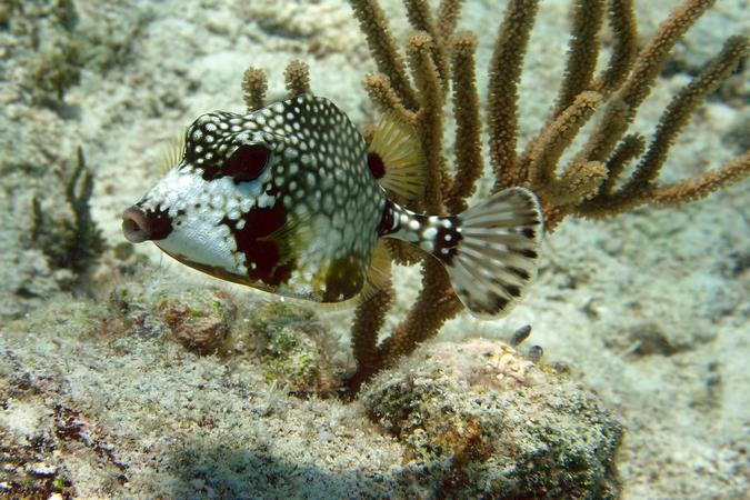 Scuba Diving St. John
